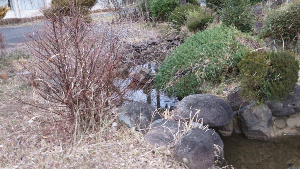 いろいろ撮影できちゃう学校スタジオ・庭の池・