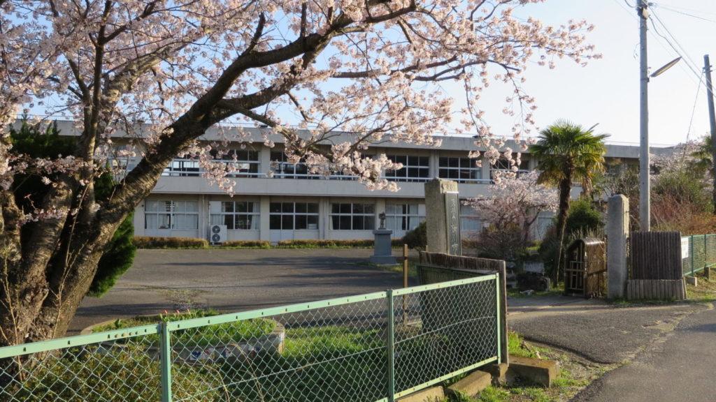 いろいろ撮影できちゃう学校スタジオ・桜・春・桜イメージ・学校前道路・通学路から校舎