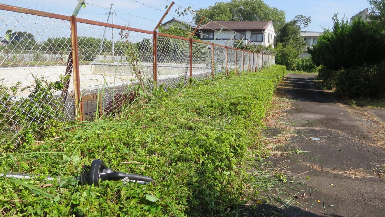 いろいろ撮影できる学校スタジオ・プール脇の植え込み・バリカンで調整