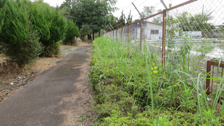 いろいろ撮影できる学校スタジオ・プール脇の植え込みの上に雑草・駆除・電動バリカ