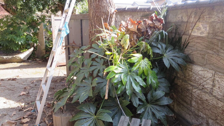 登録有形文化財橋本旅館スタジオ・庭の枝切‣木の伐採・