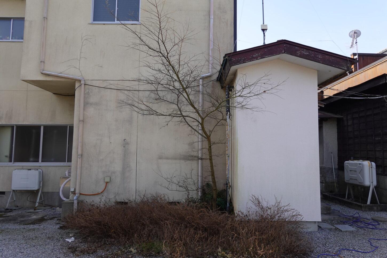 登録有形文化財橋本旅館スタジオの北側庭の木を根元から切りました