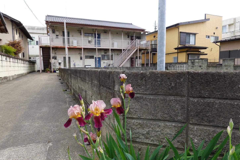 昭和でレトロなアパートスタジオ・入り口通路・アヤメの花・咲いてます