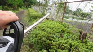 いろいろ撮影できる学校スタジオ・プール脇の道・草刈・植え込みをバリカン・整備