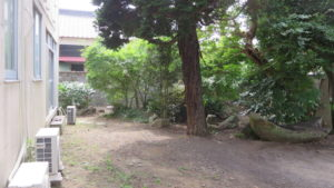 登録有形文化財橋本旅館スタジオ庭・整備-枝・伐採・撮影準備