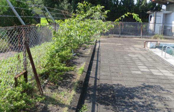 いろいろ撮影できる学校スタジオのプールサイド側に外から木の枝が出てきてたので伐採しました。