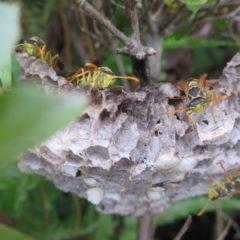 蜂・ハチ・ハチの巣・いろいろ撮影できる学校スタジオ・植え込みの中・駆除