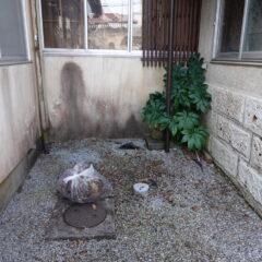 登録有形文化財橋本旅館スタジオ・中庭・木の伐採。清掃