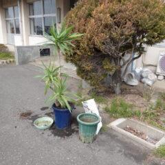 ・いろいろ撮影できる学校スタジオ・校長室の観葉植物・鉢の入れ替え・