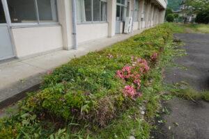 ヘッチトリマー・植え込み上の手入れ・草刈・雑草駆除・学校スタジオ