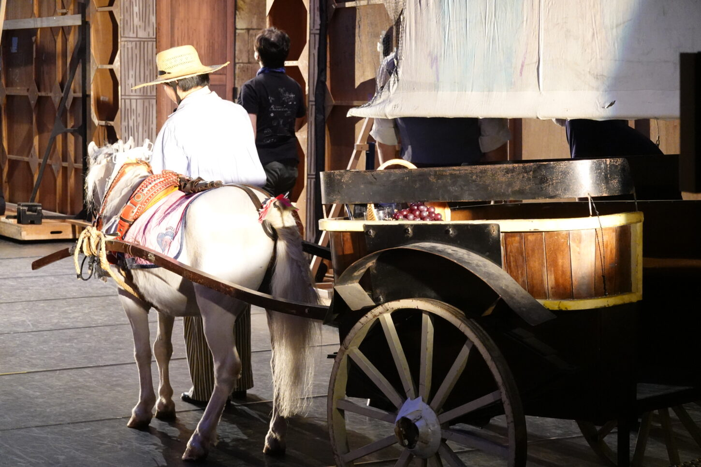牧阿佐美バレー団・リーズの結婚・白馬・ポニー・馬車・動物プロのお仕事・アトリエミカミ
