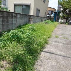 元ビジネスホテルスタジオの前の左側の雑草