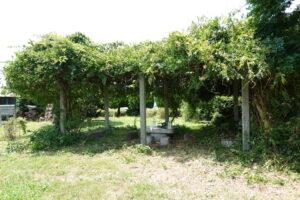 学校スタジオ・正面庭の休憩スペース・枝払いしたら涼しい場所に