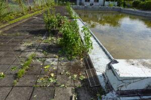 プール周りの雑草・