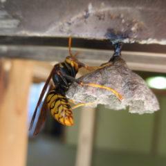 スタジオ窓下・蜂の巣