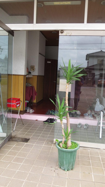 アトリエミカミ・戸建スタジオ・ハウススタジオ・観葉植物・ユッカ